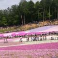 .゚+.芝桜満開+.゚